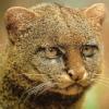 yaguarundee userpic