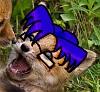 wtf fox
