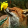 fox with flower