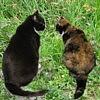 sunray45: Cats