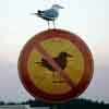no birds, bird