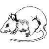 Bryan: rat