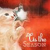 Holidays: Kitten Tis the Season
