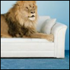 03: [lion] get your own couch asshole