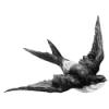 morvernkallar userpic