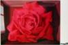rose magritt