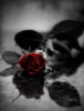 my_wilting_rose userpic