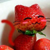 japankasasagi: strawberry kitty