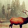 marchskies: woods