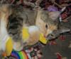 Ut`a ex machina: котяка обнимает банан