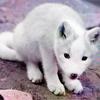 ★ wildfire ★: wolf cub