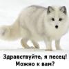 Julia Pogodina: Песец