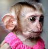 обезья
