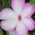 fleurevetted userpic