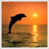 misc: dolphin