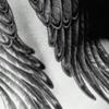 vivid_winged