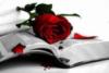 Библия, роза