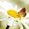 shiiki userpic