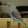 twinparrotlets userpic