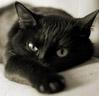 black_snowcat userpic