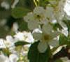 cheremuhina userpic