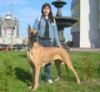 kleopatra_dog userpic