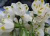 весна, квіти