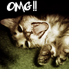 Cat: omgkitty