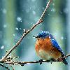 Winter Bird 2