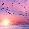 sun_and_sea userpic