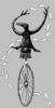 figbash acrobate