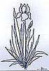 iris_flower0802 userpic