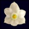24_paperwhites userpic