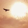 owlark userpic