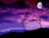 lavender_eve userpic