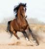 Лошадь в тумане: лошадка