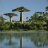 baobababa userpic