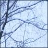 WinterTricia