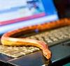 змея на клавиатуре