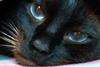 starryeyed_cat userpic