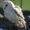 vo owl