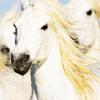 Nature: horse