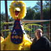 Big Bird // And me!