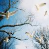 Lomer: birds