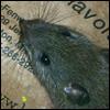 merkur userpic