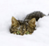 коша снеговая1