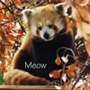 Varda ☆: Red Panda Meow