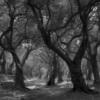 dark woodlans