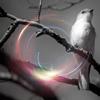 stock - winter bird