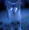 котенок-призрак
